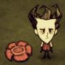 Цветок гломмера рядом с Уилсоном