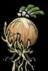 Лук растение.png