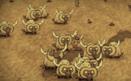 185px-A herd of Beefalos