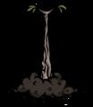 Саженец ветвистого дерева