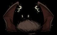 Vampire Bat Dead