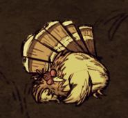 Gobbler asleep