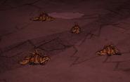 Спящие гекконы
