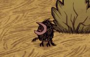 Маленькая птица кричит