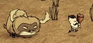 Angry Beefalo