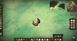 Shipwrecked073