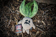 Mandrake-003