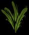 Carrot plant med