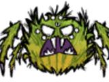 Araignée guerrière