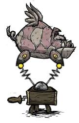 Lợn Ma Thuật