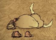 Убитый бифало