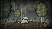 Енотокот под дождём