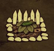 Кукуруза на грядке