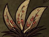 Buisson à baies