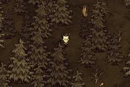 Wilson w guzowatym lesie