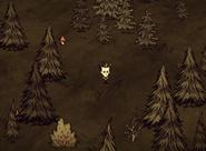 Wilson w lesie