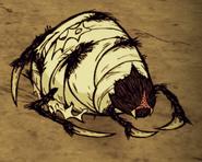 Śpiąca pajęcza królowa