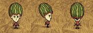 Wilson Modny melon