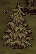 Przykładowe guzowate drzewo