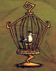Mewa w klatce na ptaki