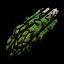 Szparagi (DSH)