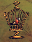 Papuga w klatce na ptaki