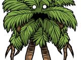 Drzewiec palmowy (DSS)