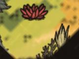 Kwiat Abigail