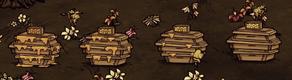 Fazy zbierania miodu