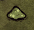 Zielony Kapelusz
