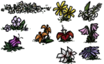 Flowers1.png