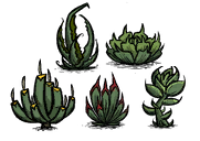 Succulents Build.png