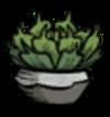 Potted Succulent Build.png