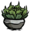 Potted Succulent Build.png