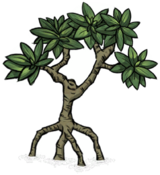 Mangrove Tree.png