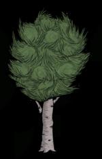 Birchnut Tree.png