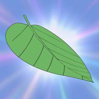 Absconding Leaf