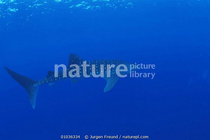 An Underwater Mystery