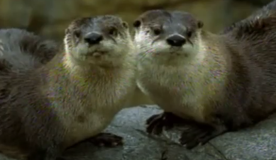 Diego and Alicia Save the Otters