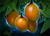 Mango Tree icon.png