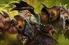 Ascendant Lone Druid Loading Screen