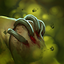 Rot icon.png