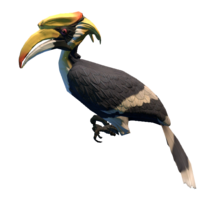 Overgrown Empire Great Hornbill Preview.png