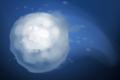 Fistful of Snowballs