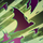 Crypt Swarm icon.png