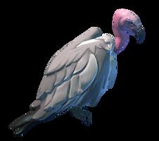 Desert Terrain Vulture Preview.png