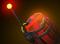 Stick o' Dynamite (750)