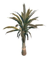 Desert Terrain Tree 1 Preview.png
