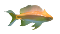 Reef's Edge Reef Fish Preview.png