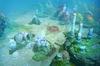Reef's Edge